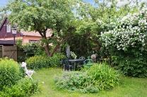 Trädgården med ett av äppelträden
